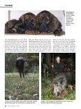 Litauen - Patenkind in fremder Wildbahn - Jagdbüro G. Kahle - Seite 3