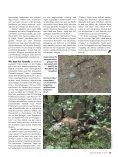 Litauen - Patenkind in fremder Wildbahn - Jagdbüro G. Kahle - Seite 4