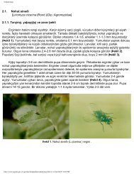 2.1. Nohut sineği [Liriomyza cicerina (Rond.)(Dip ... - Keys