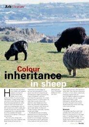 Colour Inheritance in Sheep - Rare Breeds Survival Trust