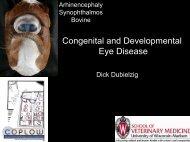 Congenital and Developmental Eye Disease
