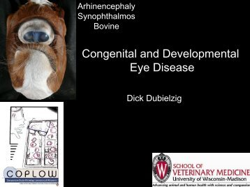 Congenital and Developmental Eye Disease