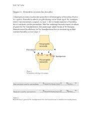 Opgave 4. Permethrin-resistens hos hovedlus