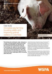 Innovative pig farming: boosting yields and improving ... - WSPA