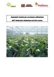 Manual Anthurium cut flower ITA - Anthura