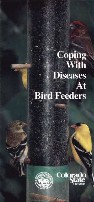Coping with Diseases at Bird Feeders - National Wildlife Health Center