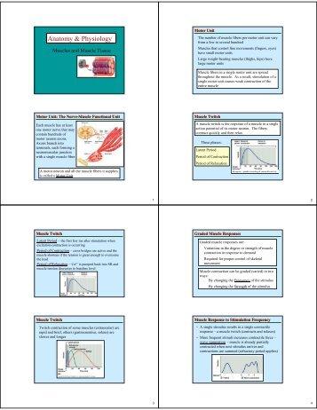 Anatomy & Physiology - Sinoe medical homepage.