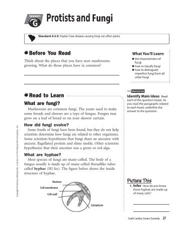 fungi worksheet free worksheets library download and print worksheets free on comprar en. Black Bedroom Furniture Sets. Home Design Ideas