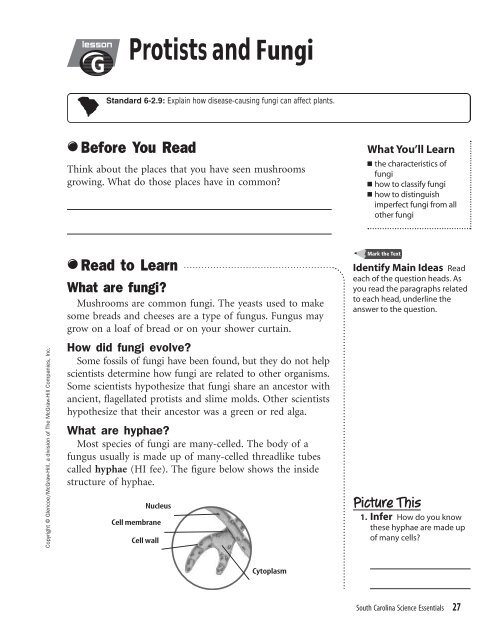 Science Essential Worksheet Lesson G Protists And Fungi