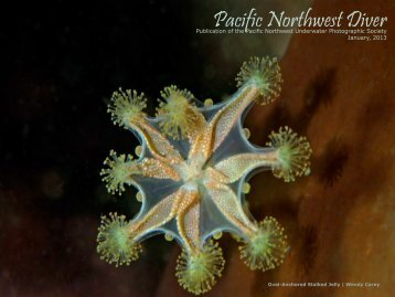 Pacific North West Diver Issue 2013 - British Society of Underwater ...