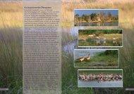 Ein faszinierendes Ökosystem