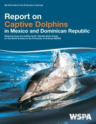 Report on Captive Dolphins in Mexico & the Dominican Republic.