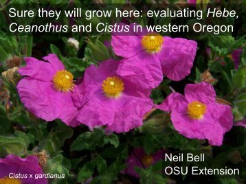 Sure they will grow here: evaluating Hebe, Ceanothus and Cistus in ...