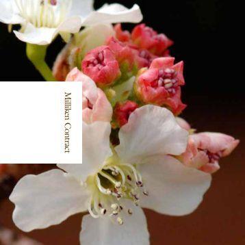 eco-logue - Home - Milliken