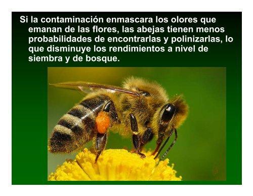 abejas melíferas en la