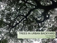 TREES IN URBAN BACKYARD - Shilpa Architects