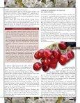 Ciliegia, a tutto tondo - L'Informatore Agrario - Page 4