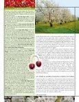 Ciliegia, a tutto tondo - L'Informatore Agrario - Page 5