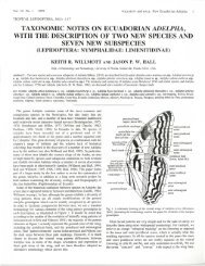taxonomic notes on ecuadorian adelpha, with the description of two ...