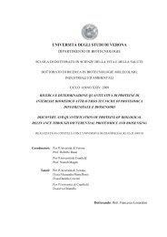 UNIVERSITĀ DEGLI STUDI DI VERONA - Università degli Studi di ...