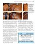 Grundlagen der Pferdereproduktion - Peter Richterich - Page 4