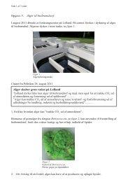 Opgave 3. Alger til biobrændstof Alger skaber grøn vækst på Lolland