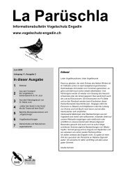 Parüschla 2 - Vogelschutz Engadin