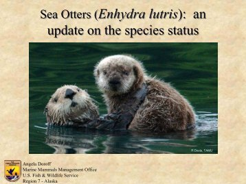 Sea Otters - Otter Specialist Group