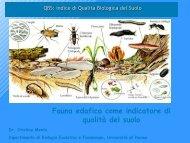 Qualità Biologica dei Suoli - Tec.bio