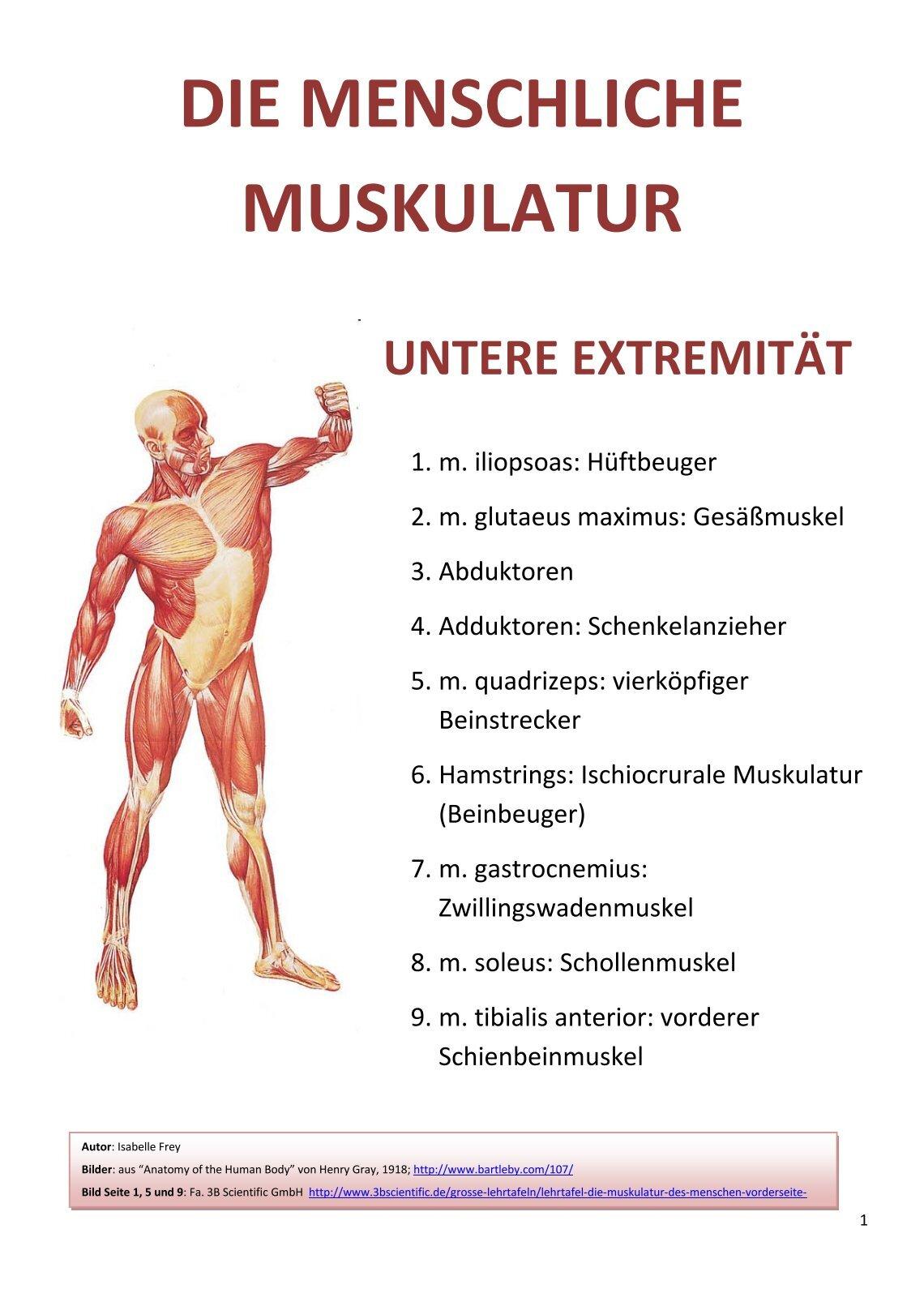 Schön Die Muskulatur Galerie - Anatomie Und Physiologie Knochen ...