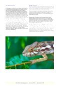 Southern Madagascar – Group Trip – Autumn 2013 - Audley Travel - Page 4