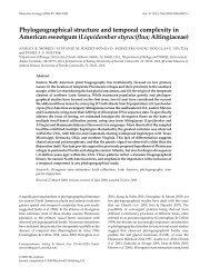 Liquidambar styraciflua; Altingiaceae - University of Alaska Fairbanks