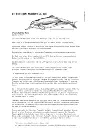 Der Chinesische Flussdelfin oder Baiji - Whale and Dolphin ...