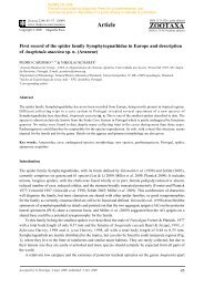 Zootaxa, First record of the spider family Symphytognathidae in ...