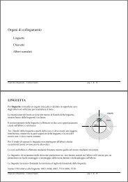 Organi collegamento (Linguette - Chiavette) - Carmnap.it