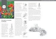 Kevään ja kesän kukkijat (pdf) - Cello