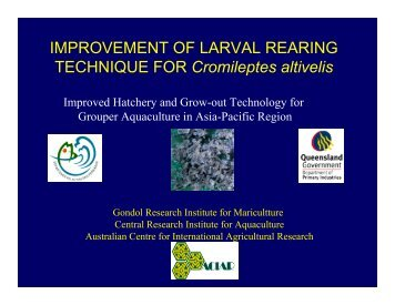 IMPROVEMENT OF LARVAL REARING TECHNIQUE FOR ... - Library