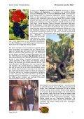 Syrah/Shiraz - Weinritter Steiermark - Seite 2