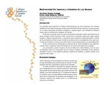 Biodiversidad De Insectos y Arácnidos En Los Museos - SOMEDICyT