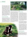 Hundekauf mit Herz und Verstand - Seite 3