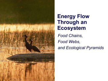 Ecology and Energy flow notes - Biology for Life