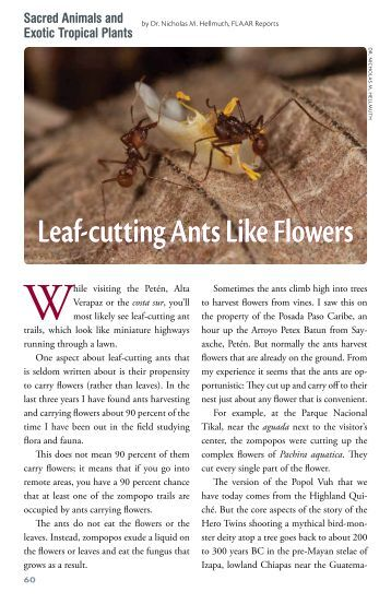 a report on the leaf cutting ants Ant - leaf cutting common names: cut ant, cutter ant, fungus ant, parasol ant,  we have received good reports from people spraying the leaves of the plants being attacked with spinosad flooding the colonies after building a dam around the surface openings usually works it is also reported that the ants can be kept out of the foliage of.
