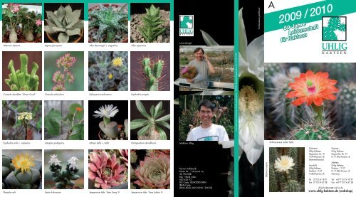 Euphorbia Fruticosa Inermis cm.6//7 pianta da collezione