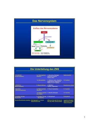Neurotransmittersysteme und ihre Rezeptoren