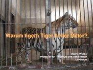 Warum tigern Tiger hinter Gitter?