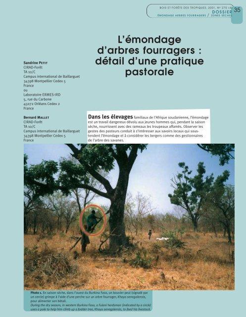 uses a pole to help him climb up a fodder tree, Khaya - Bois et forêts ...