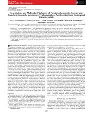 Morphology and Molecular Phylogeny of Pseudotrichonympha ...