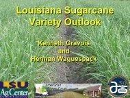 Louisiana Sugarcane Variety Outlook