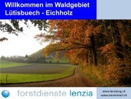 im Waldgebiet Lütisbuech - Gemeinde Ammerswil