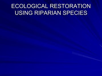 Lee Hesketh: Ecological Restoration using Riparian Species